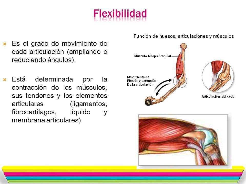 FlexibilidadEs el grado de movimiento de cada articulación (ampliando o reduciendo ángulos).