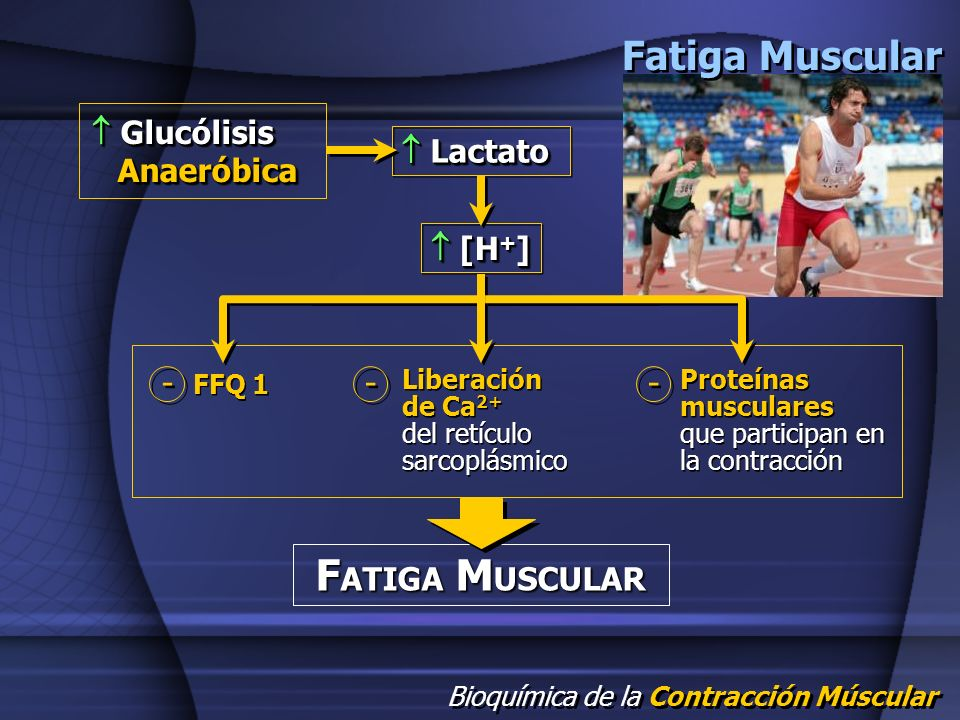  Glucólisis Anaeróbica