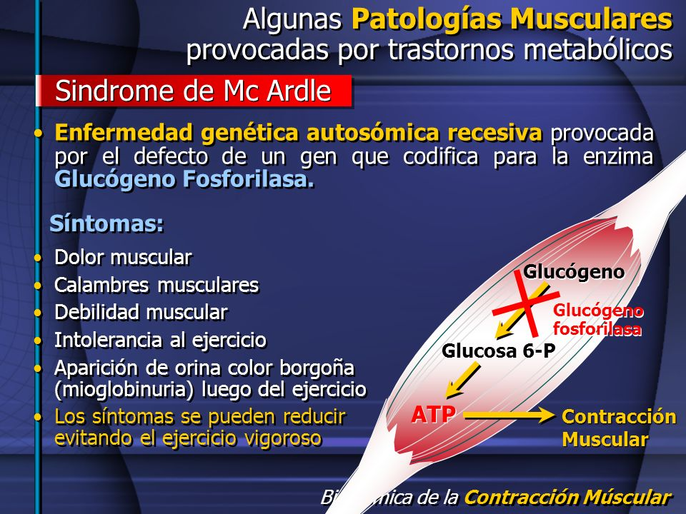 Algunas Patologías Musculares provocadas por trastornos metabólicos