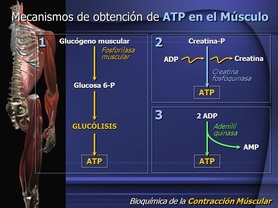 Presentacion de adp en el seb con espontaneo incluido - 3 part 4
