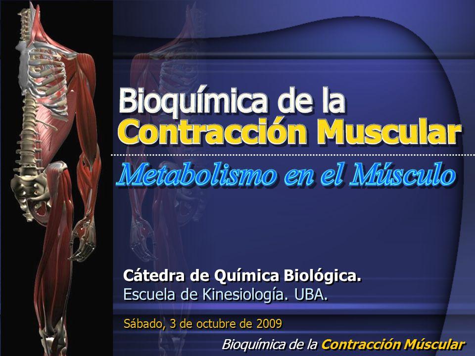 Cátedra de Química Biológica. Escuela de Kinesiología. UBA.