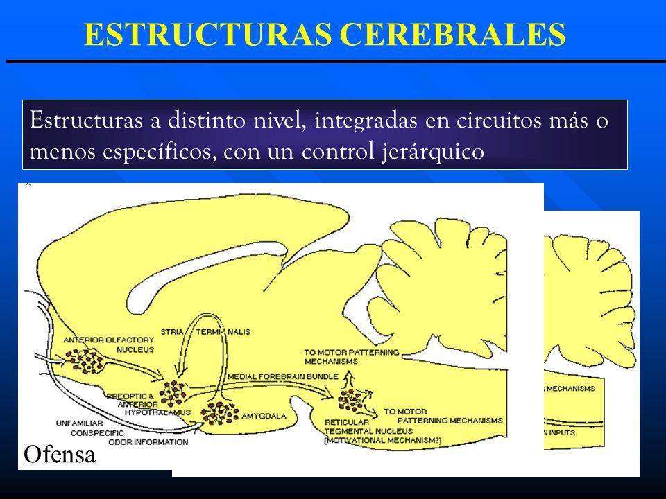 ESTRUCTURAS CEREBRALES