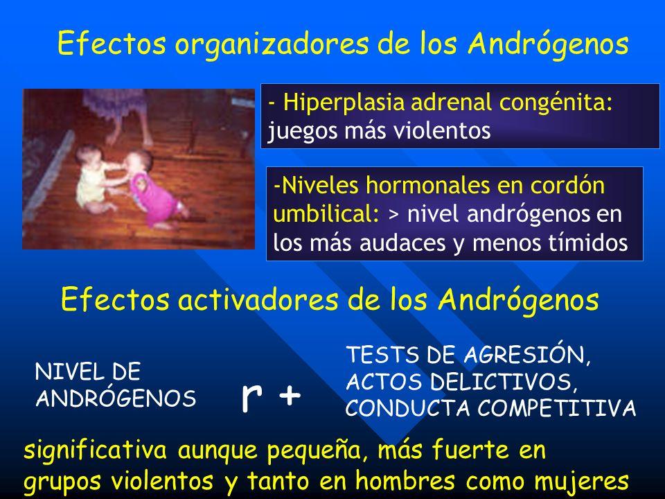 Efectos activadores de los Andrógenos