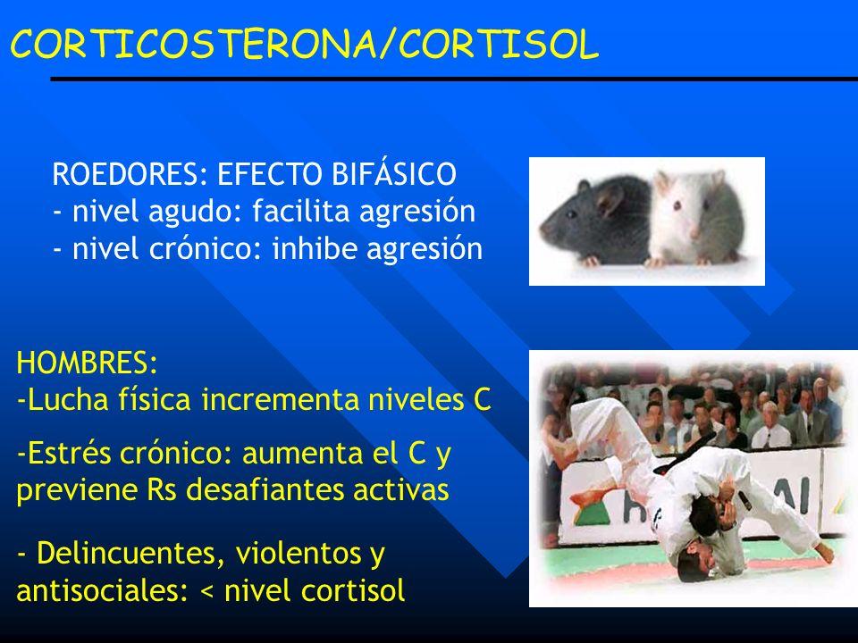 CORTICOSTERONA/CORTISOL