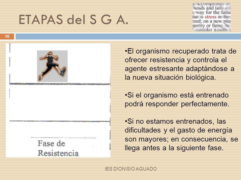 ETAPAS del S G A. El organismo recuperado trata de ofrecer resistencia y controla el agente estresante adaptándose a la nueva situación biológica.