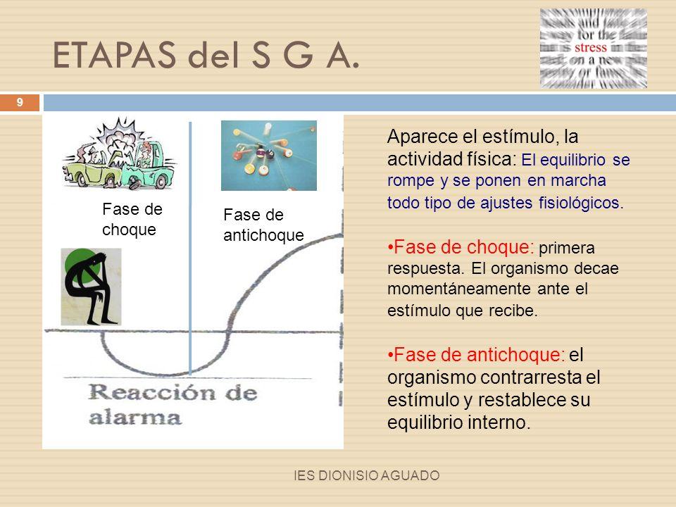 ETAPAS del S G A. Aparece el estímulo, la actividad física: El equilibrio se rompe y se ponen en marcha todo tipo de ajustes fisiológicos.