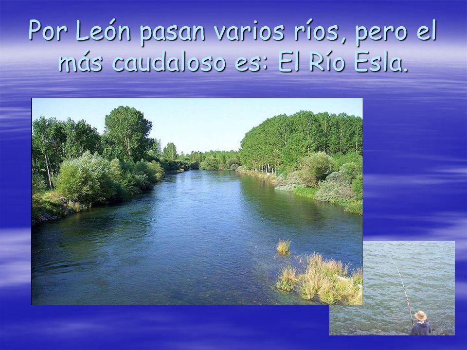 Por León pasan varios ríos, pero el más caudaloso es: El Río Esla.