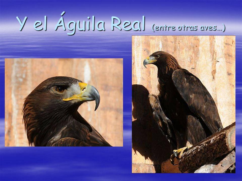Y el Águila Real (entre otras aves…)