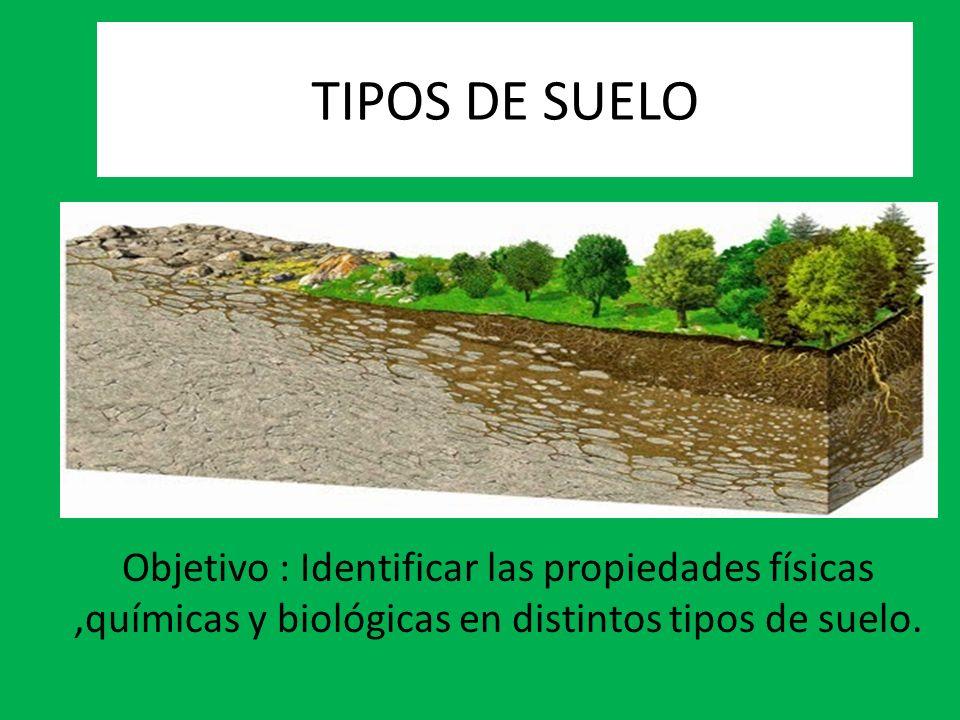 Tipos de suelo objetivo identificar las propiedades for Como estan formados los suelos