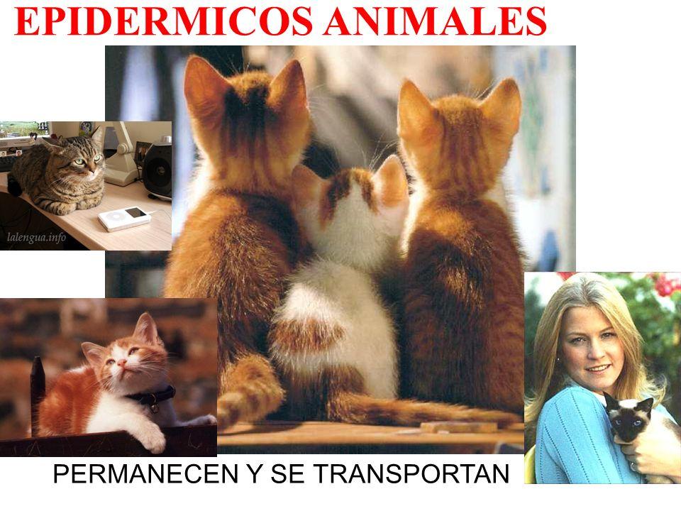 EPIDERMICOS ANIMALES PERMANECEN Y SE TRANSPORTAN