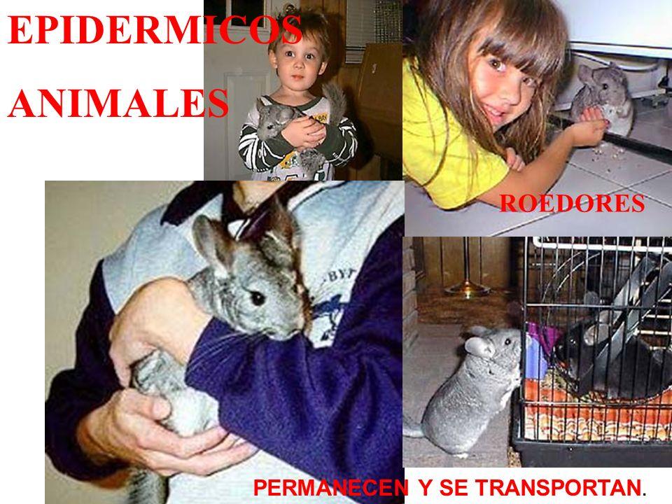 EPIDERMICOS ANIMALES hamster ROEDORES PERMANECEN Y SE TRANSPORTAN.