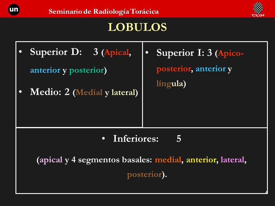(apical y 4 segmentos basales: medial, anterior, lateral, posterior).