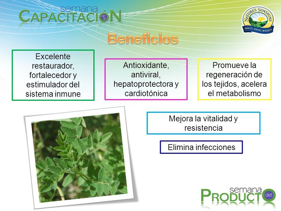 Beneficios Excelente restaurador, fortalecedor y estimulador del sistema inmune. Antioxidante, antiviral, hepatoprotectora y cardiotónica.