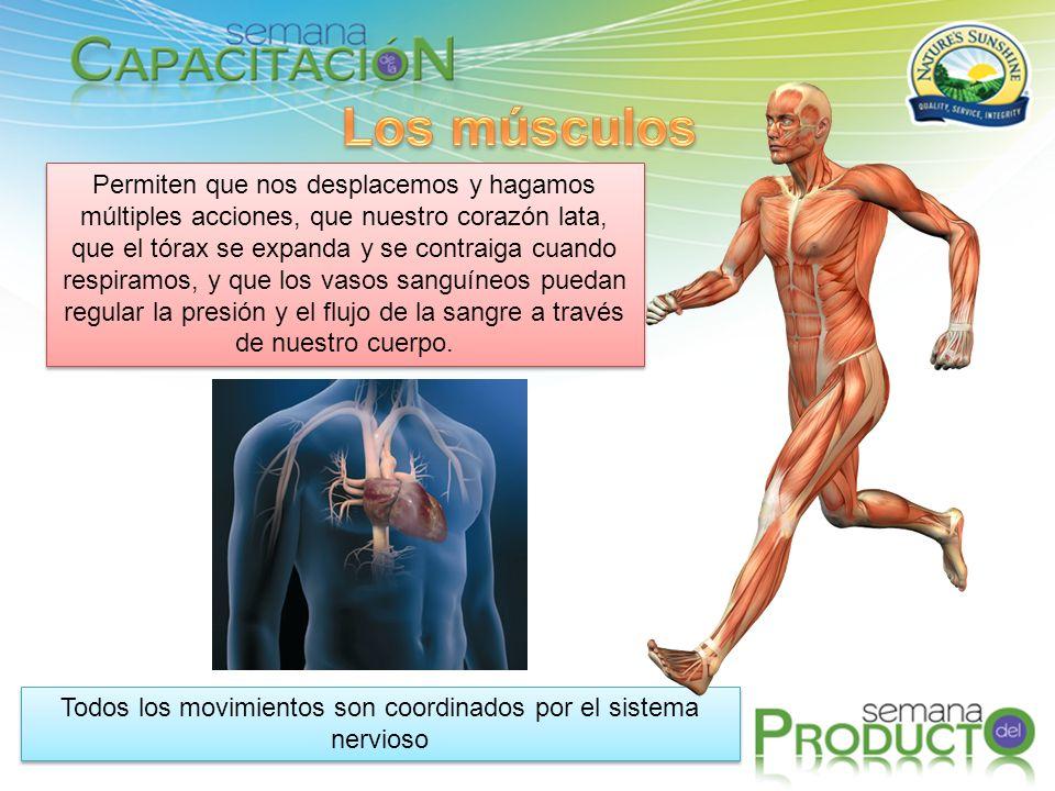 Todos los movimientos son coordinados por el sistema nervioso