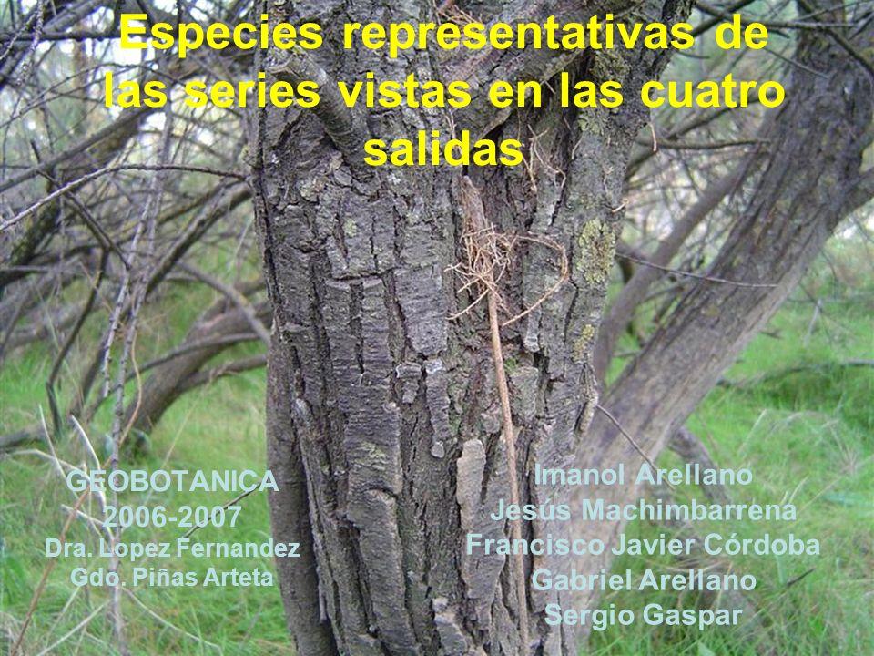 Especies representativas de las series vistas en las cuatro salidas