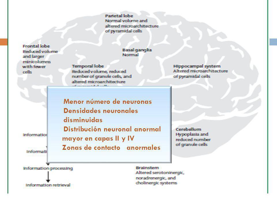 Menor número de neuronas Densidades neuronales disminuidas