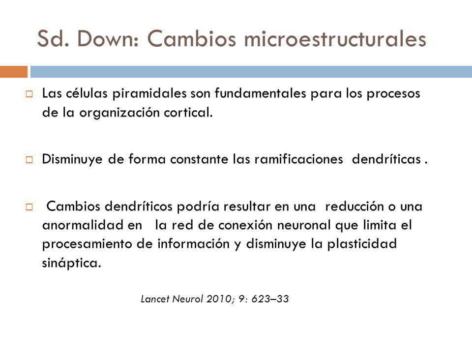 Sd. Down: Cambios microestructurales