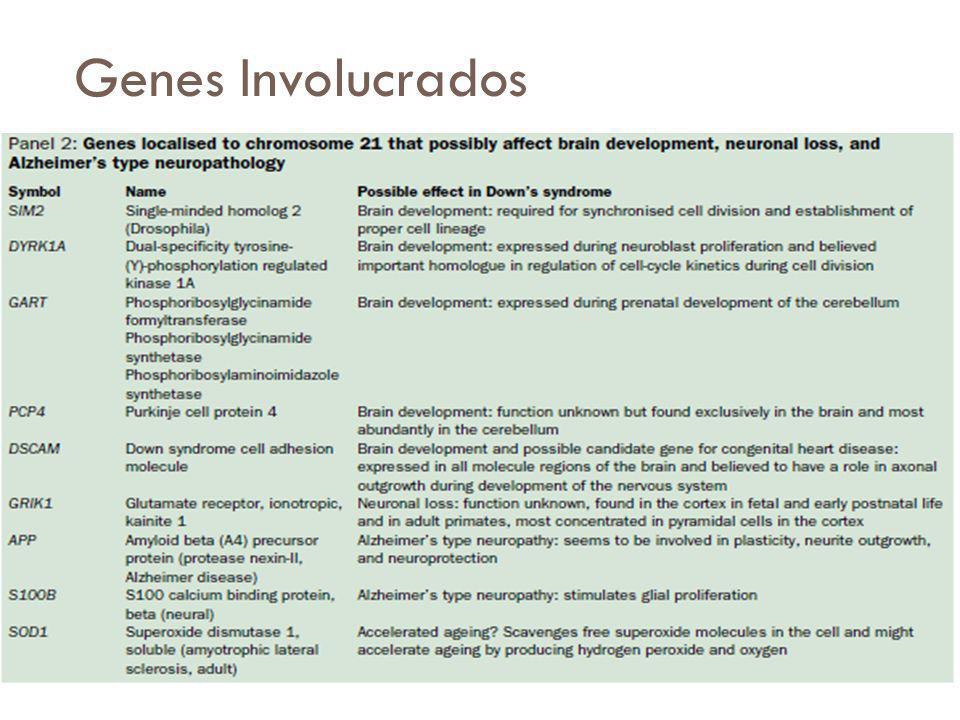 Genes Involucrados Estudios han relacionado la disfunción mitocondrial con el síndrome de Down y la enfermedad de Alzheimer.