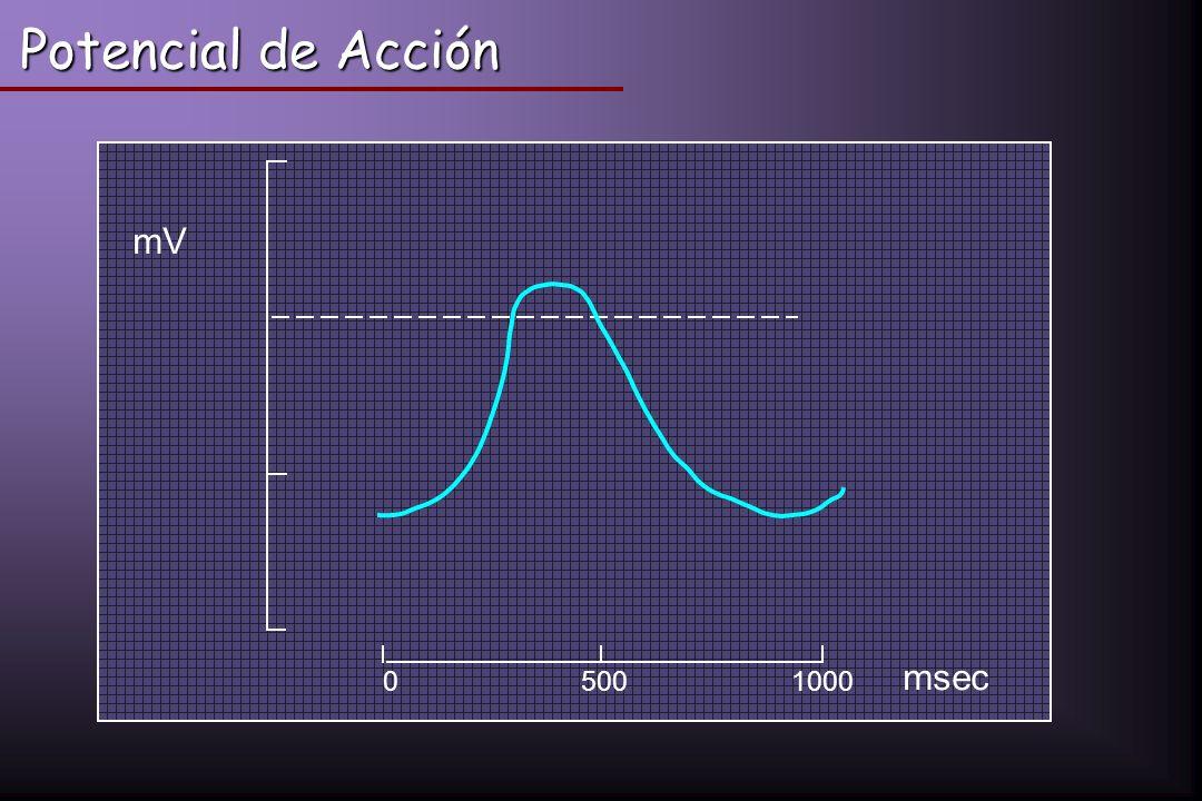 Potencial de Acción 500 1000 mV msec