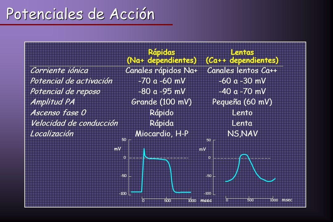 Potenciales de Acción Corriente iónica Canales rápidos Na+