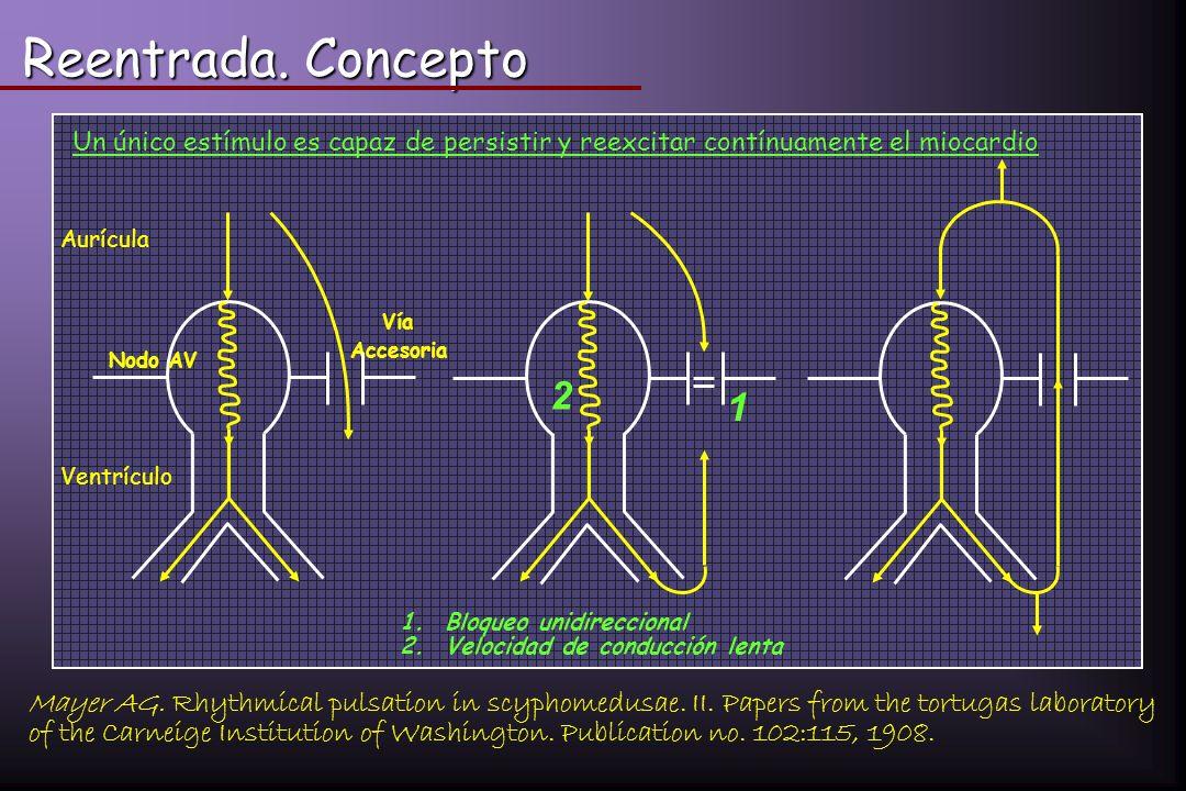 Reentrada. Concepto Un único estímulo es capaz de persistir y reexcitar contínuamente el miocardio.