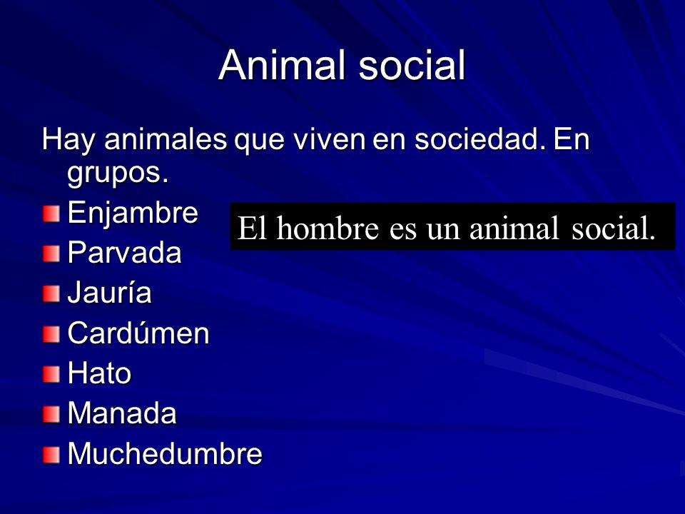 Animal social El hombre es un animal social.
