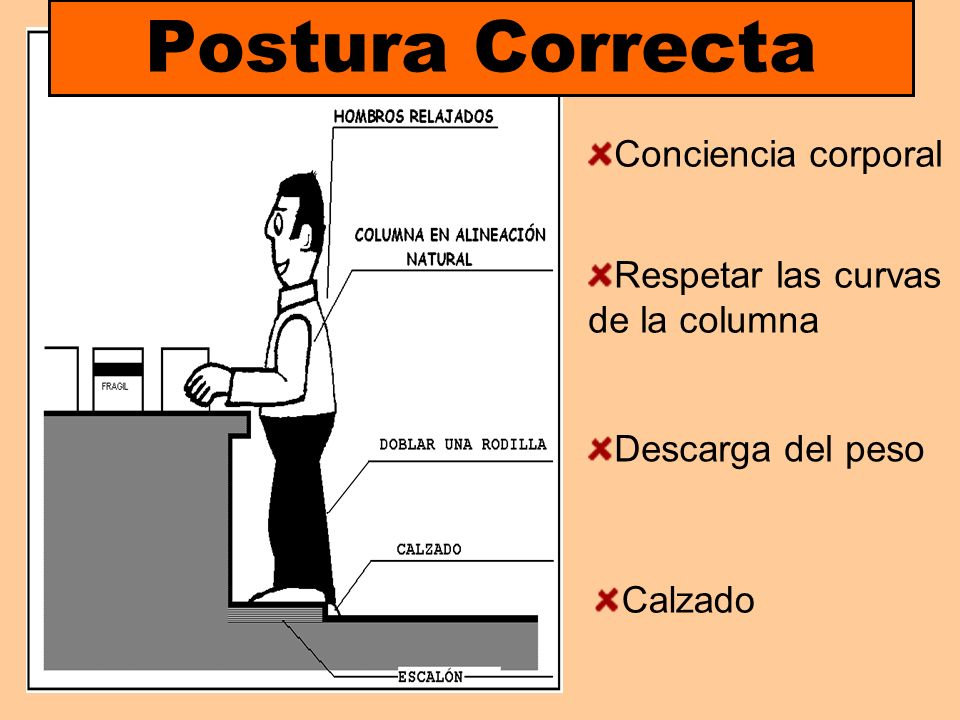 Postura Correcta Conciencia corporal Respetar las curvas de la columna