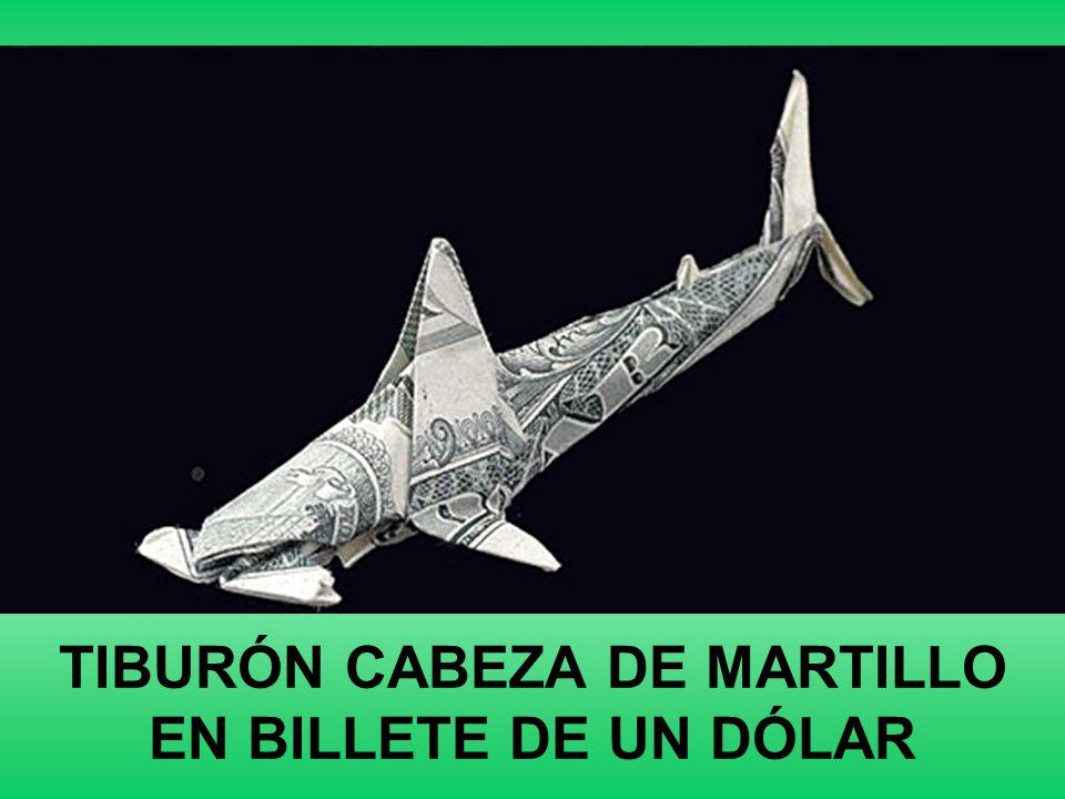 TIBURÓN CABEZA DE MARTILLO EN BILLETE DE UN DÓLAR