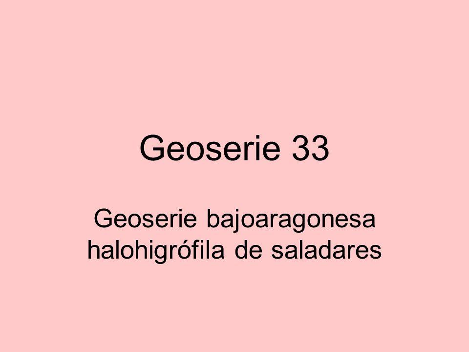 Geoserie bajoaragonesa halohigrófila de saladares