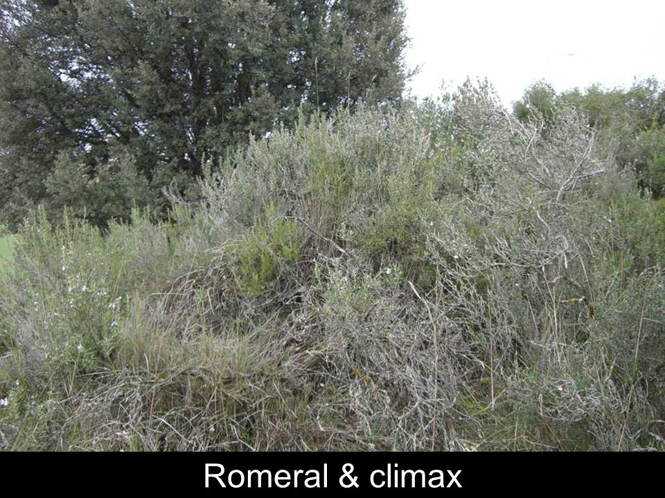 Romeral & climax
