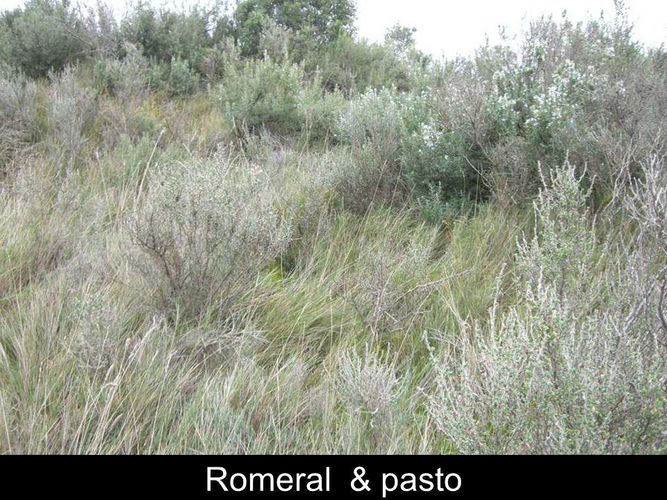 Romeral & pasto