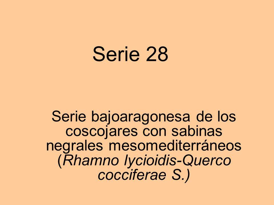 Serie 28 Serie bajoaragonesa de los coscojares con sabinas negrales mesomediterráneos (Rhamno lycioidis-Querco cocciferae S.)