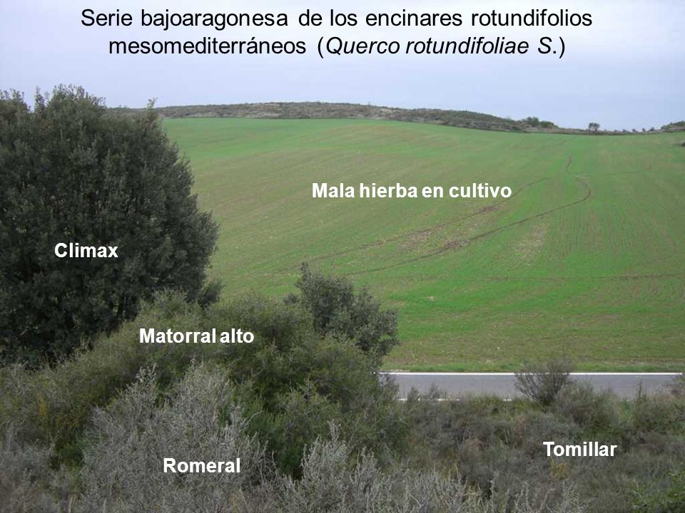 Serie bajoaragonesa de los encinares rotundifolios mesomediterráneos (Querco rotundifoliae S.)