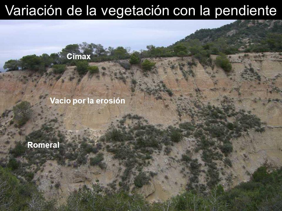 Variación de la vegetación con la pendiente