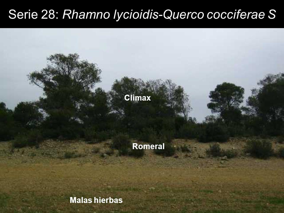 Serie 28: Rhamno lycioidis-Querco cocciferae S