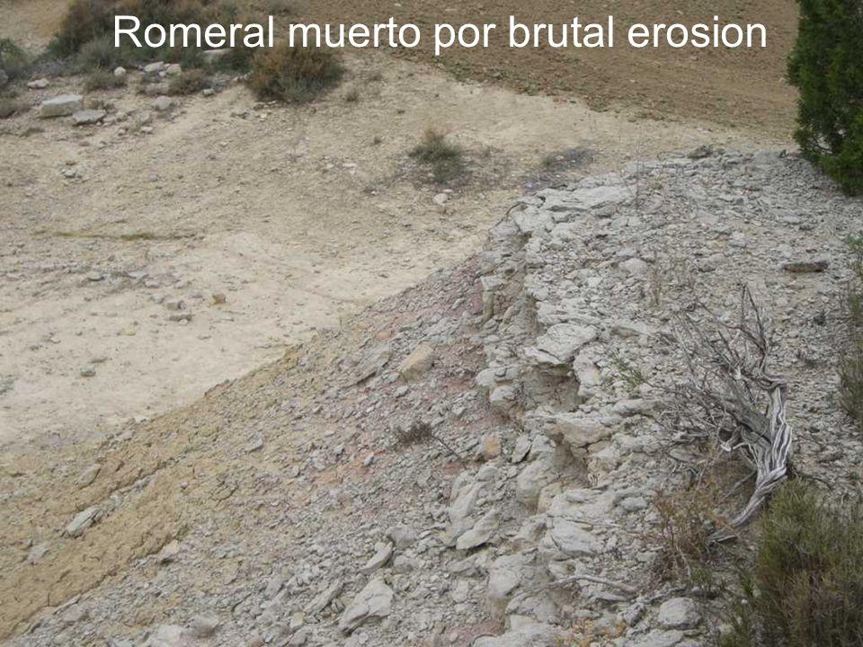 Romeral muerto por brutal erosion
