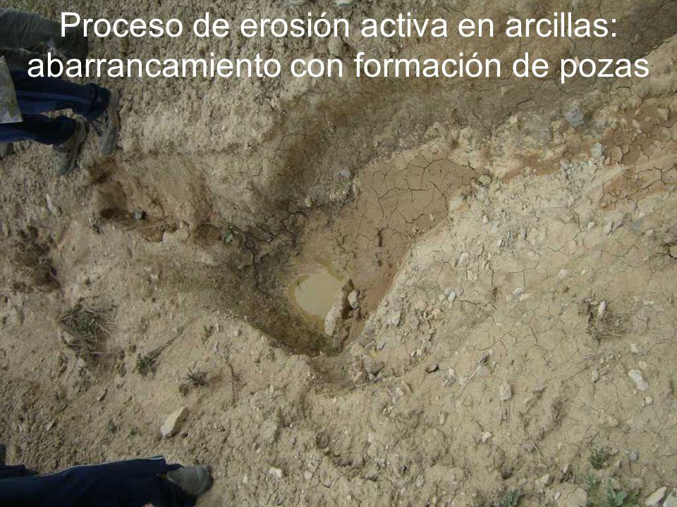 Proceso de erosión activa en arcillas: abarrancamiento con formación de pozas