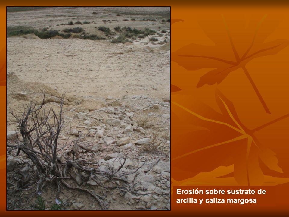 Erosión sobre sustrato de arcilla y caliza margosa