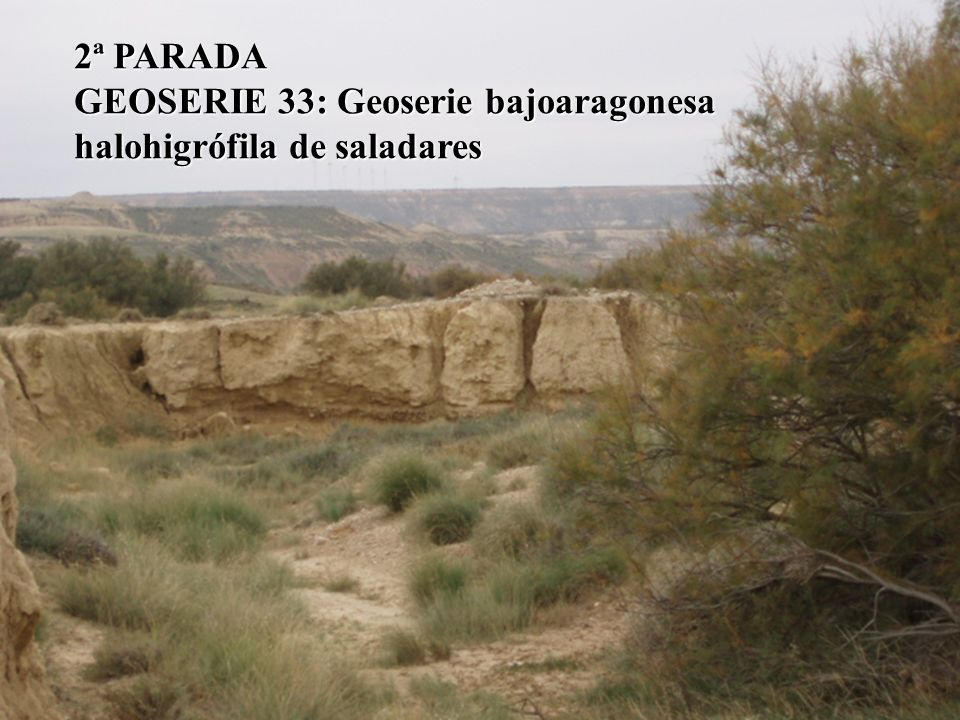 2ª PARADA GEOSERIE 33: Geoserie bajoaragonesa halohigrófila de saladares