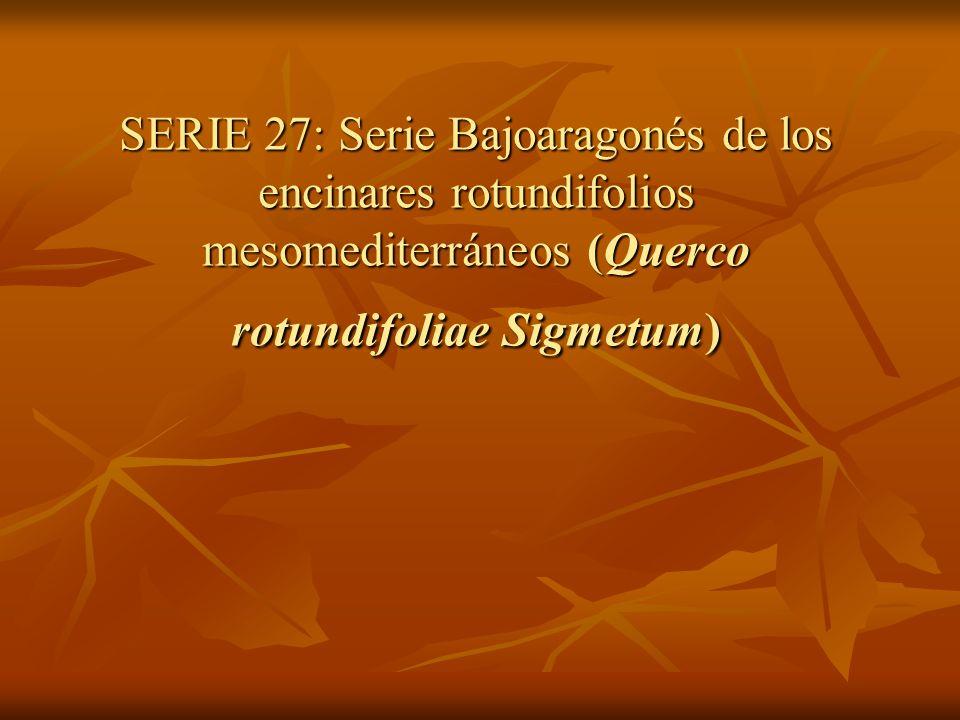 SERIE 27: Serie Bajoaragonés de los encinares rotundifolios mesomediterráneos (Querco rotundifoliae Sigmetum)