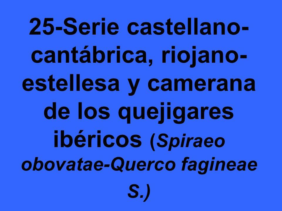 25-Serie castellano-cantábrica, riojano-estellesa y camerana de los quejigares ibéricos (Spiraeo obovatae-Querco fagineae S.)