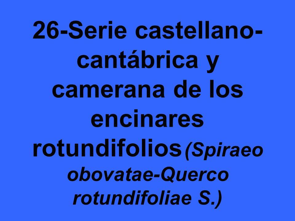 26-Serie castellano-cantábrica y camerana de los encinares rotundifolios (Spiraeo obovatae-Querco rotundifoliae S.)
