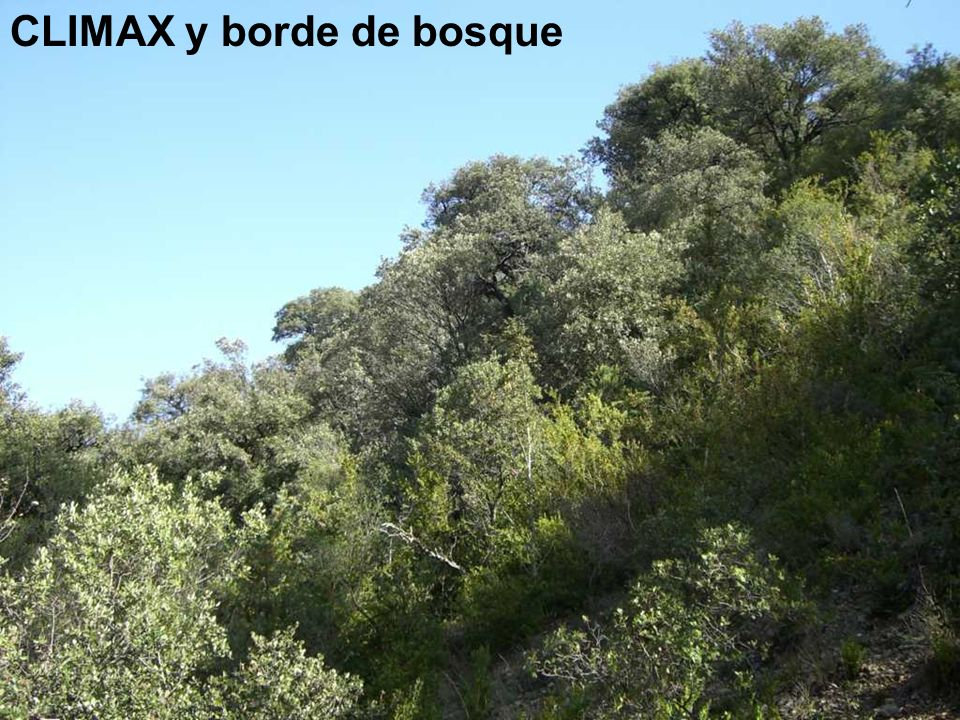 CLIMAX y borde de bosque