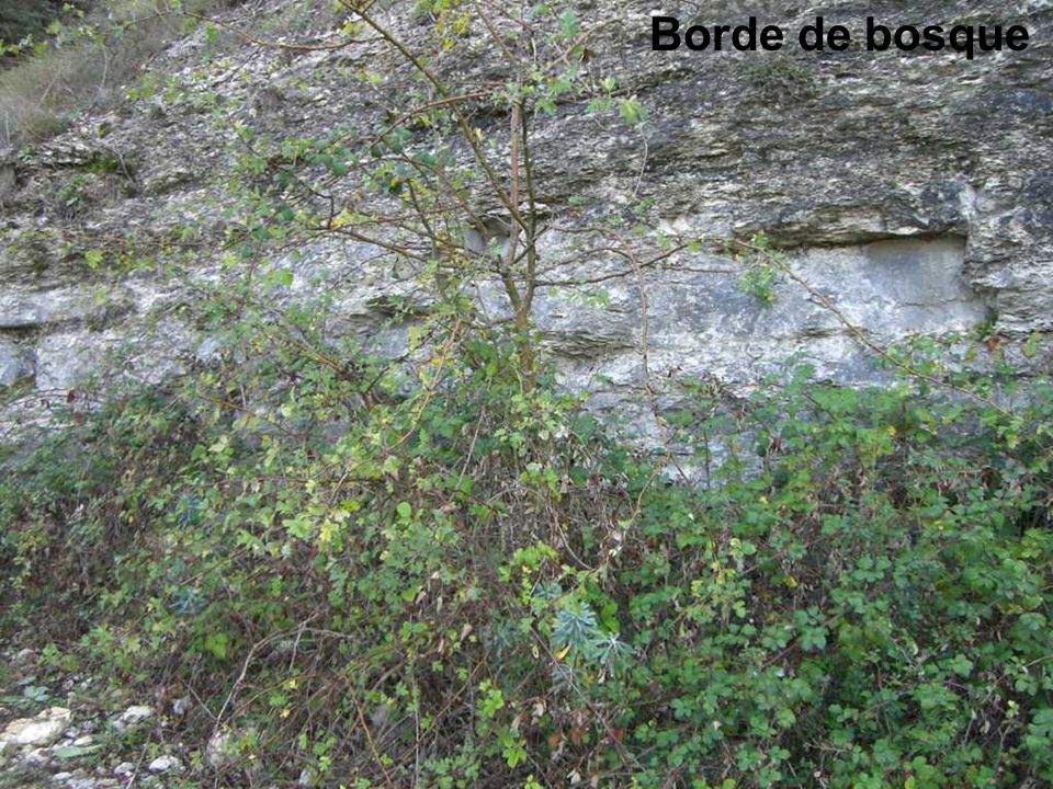 Borde de bosque