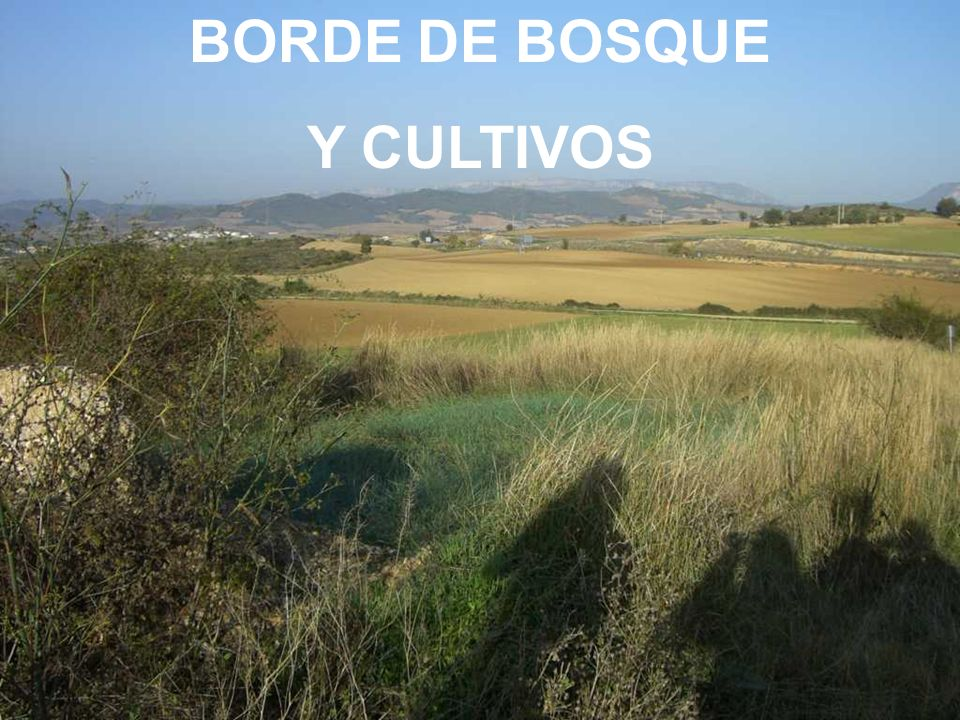 BORDE DE BOSQUE Y CULTIVOS