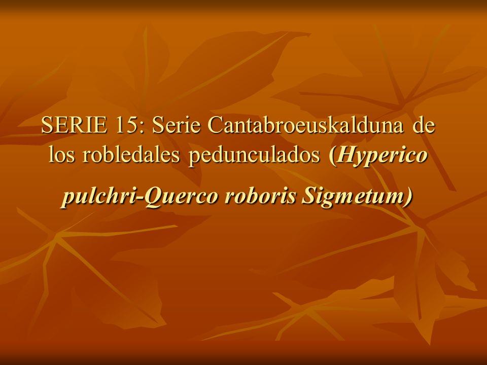 SERIE 15: Serie Cantabroeuskalduna de los robledales pedunculados (Hyperico pulchri-Querco roboris Sigmetum)