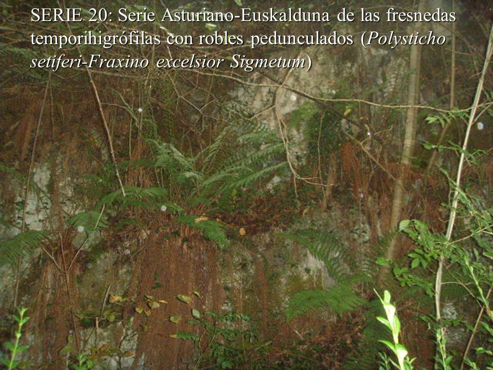 SERIE 20: Serie Asturiano-Euskalduna de las fresnedas temporihigrófilas con robles pedunculados (Polysticho setiferi-Fraxino excelsior Sigmetum)