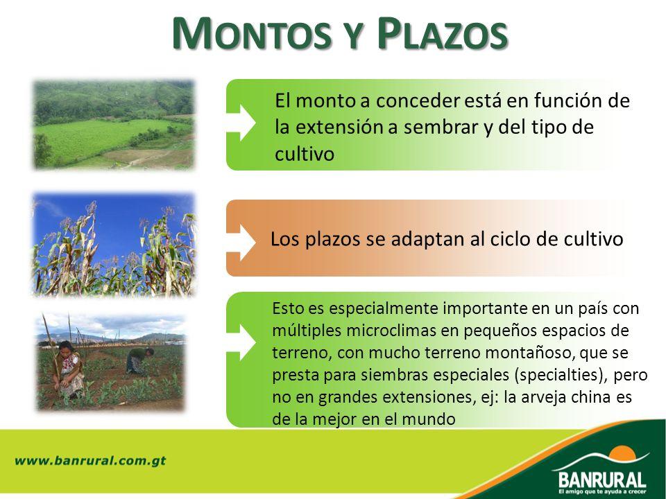 Montos y Plazos El monto a conceder está en función de la extensión a sembrar y del tipo de cultivo.