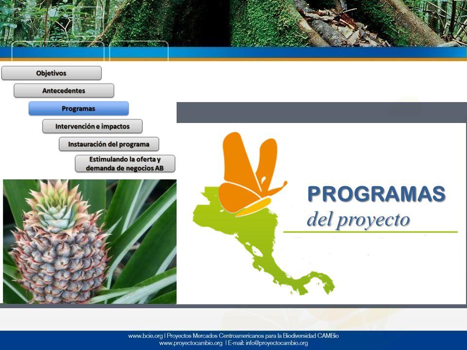 PROGRAMAS del proyecto