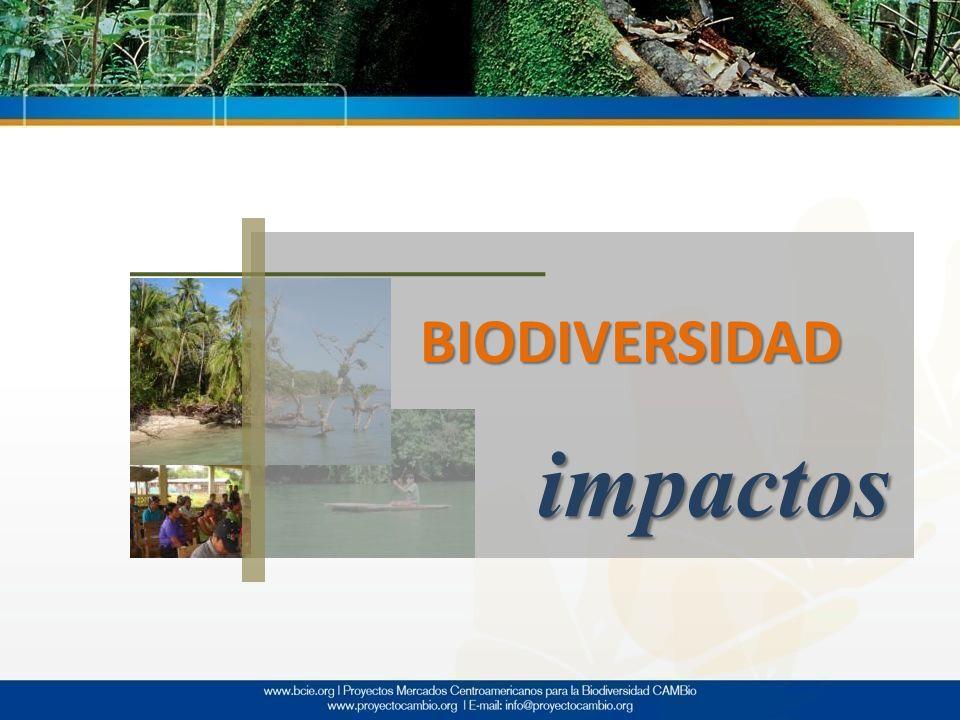 BIODIVERSIDAD impactos
